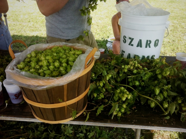 hops from szaro farms