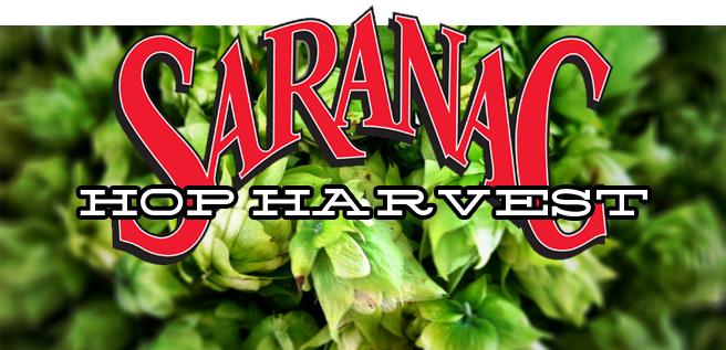 saranac-hop-harvest